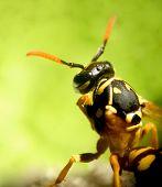 Wasp...(3)