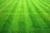 Bowling Green Grass Background.