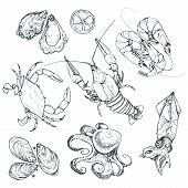 Seafood Sketches Isolated On White Background. Hand Drawn Sea Food Collection. Vector Illustration F poster