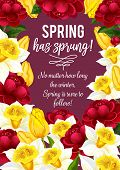 Spring Is Sprung Quote For Springtime Greeting Card And Seasonal Wishes Design. Vector Bunch Of Bloo poster
