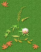 image of ragweed  - ragweed and autumn leaves on flecked background  illustration - JPG