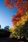 stock photo of chloroplast  - A shock of color on a clear Autumn day - JPG