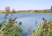Taboa e junco em uma lagoa