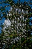 Skyscraper with a tree in front