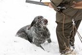 hunting dog with hunter