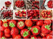 Collage Of Mixed Red Strawberry Berries. Collection Of Strawberry Berries.  Collage Of Fresh Ripe Fo poster