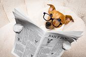 Cool Funny Jack Russell  Dog Reading A Newspaper Or Magazine Wearing Reading Glasses poster