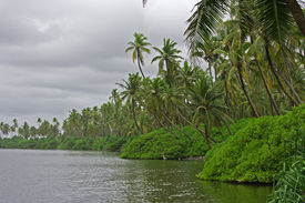 picture of tarzan  - Tropical jungle - JPG