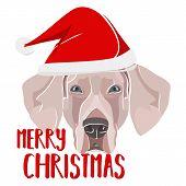 Illustration Dog Weimaraner Merry Christmas poster