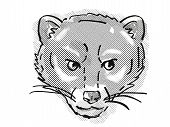 Retro Cartoon Style Drawing Of Head Of A Malayan Civet Or Viverra Tangalunga , An Endangered Wildlif poster