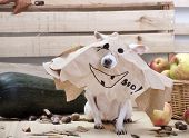 Dog Chihuahua Breed On Halloween. poster