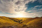 Beautiful Sunrise Climbs Sumba Island Indonesia. Scenery Nature Landscape. Amazing View on Yellow Gr poster