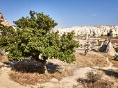 Green Leaves Covered Tree And Dead Tree At The Rock Site Of Cappadocia poster