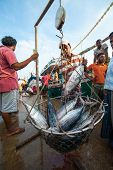 MIRISSA, SRI LANKA - APRIL 10: Fishermen returned to their work in Mirissa, Sri Lanka on April 10, 2
