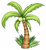 Illustration of isolated palm on white