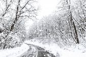 Winter Forest Snow Road. Forest Road Winter Snow View. poster