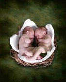 Twins In Egg