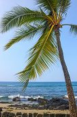 Coast Of Kailua-kona With Palm, Big Island, Hawaii