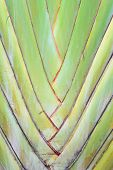 A Type Of Banana Leaves Cascaded Like A Blow Background Texture