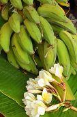 Banana - The banana leaves and flowers