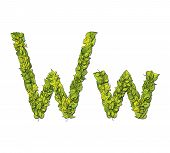 image of storybook  - Leafy storybook font depicting a letter W in upper and lower case - JPG