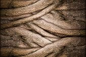 stock photo of lichenes  - Tree and Bark Texture in Nature Abstract Background - JPG