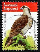 Postage Stamp Belgium 2011 Osprey, Sea Hawk, Bird
