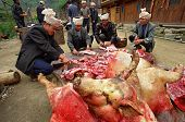 Asians Cut Up Carcass Of Pigs In A Village Street.