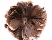 End feather duster close-up