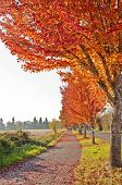 Beautiful autumn walkway with orange colored leaves