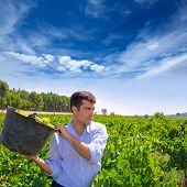 chardonnay harvesting with harvester farmer winemaker in Mediterranean