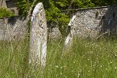Overgrown Graveyard, Summer
