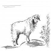 Hand drawn fluffy goat