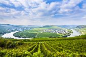 stock photo of moselle  - famous Moselle Sinuosity in Trittenheim germany under blue cloudy sky - JPG