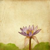 Lotus Flower On Old Grunge Paper