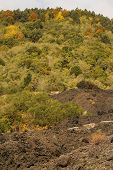 Close-up Of The Solidified Lava And The Small Vegetation Taking Foot On It, South Side Of The Etna,