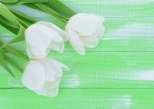 Beautiful bouquet of white tulips on light green background
