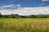 Green mountain and meadow in thailand