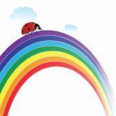 Ladybird On Rainbow
