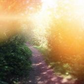 Beautiful path in woods with lighting effect - instagram