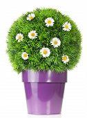 Blume globe