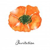 Poppy flowers. Greeting or invitation vector card. Watercolor drawing. Hand drawn aquarel illustration.