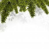 foto of fir  - Christmas background with fir and stars - JPG