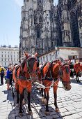 VIENNA, AUSTRIA-July 4: a horse and carriage carries tourists on JULY 4, 2014 in Vienna, St. Stephen's Cathedral is the most important religious building in Vienna.