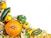 Composition of summer squashes, pumpkins and dead leaves with white space