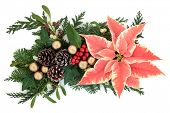 Poinsettia flower christmas and thanksgiving decoration with gold baubles, fir,holly, mistletoe, ivy and cedar cypress leaf sprigs over white.