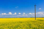 power line on rape field. Ukraine.