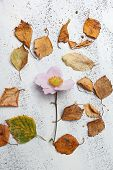 Autumnal White Background With Dry Leaves And A Flower