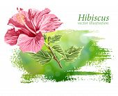 Hibiscus flower on green background. Vector drawing / Eps10