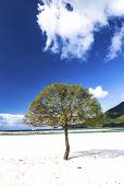 Beach Beautiful Blue Sky And Trees On Sand